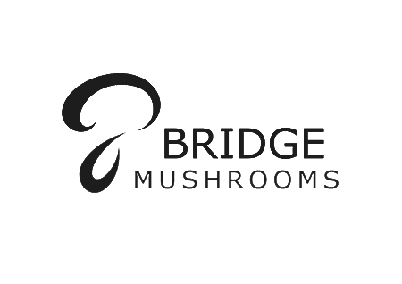 Web-Designer-Northern-Ireland-McCabe-Graphics-Bridge-Mushrooms